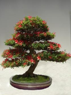 bonsai geschenkt bekommen welcher baum pflanzenbestimmung pflanzensuche green24 hilfe. Black Bedroom Furniture Sets. Home Design Ideas
