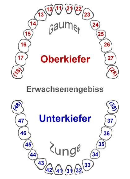 Nummerierung zähne